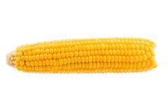 Orecchie di mais isolate su fondo bianco Immagine Stock Libera da Diritti