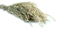 orecchie di riso su bianco Fotografia Stock Libera da Diritti