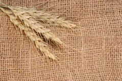 Orecchie di Rye su tessuto immagine stock