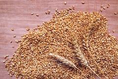 Orecchie e grani del grano dopo il raccolto Fotografia Stock Libera da Diritti