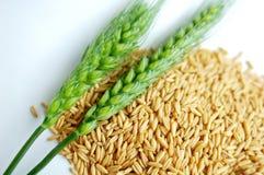 Orecchie e granulo del frumento Fotografia Stock