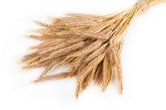 Orecchie mature del mazzo del grano isolate su fondo bianco Fotografie Stock Libere da Diritti