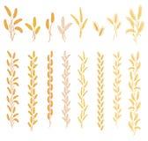 Orecchie mature delle piante del cereale Fotografie Stock