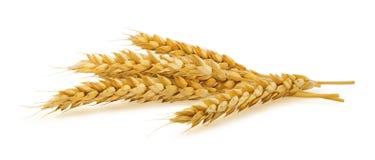Orecchie orizzontali del grano isolate su fondo bianco Immagine Stock