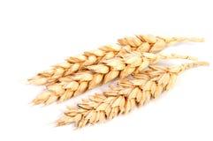 Orecchie orizzontali del grano isolate su fondo bianco come elemento di progettazione di pacchetto Immagini Stock Libere da Diritti
