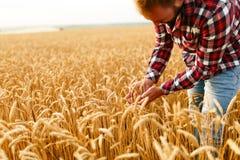 Orecchie sorridenti della tenuta dell'uomo di grano su un fondo un giacimento di grano L'agricoltore felice dell'agronomo si preo Fotografie Stock