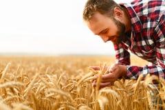 Orecchie sorridenti della tenuta dell'uomo di grano su un fondo un giacimento di grano L'agricoltore felice dell'agronomo si preo Immagini Stock