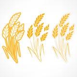 Orecchie stilizzate di grano Fotografia Stock Libera da Diritti