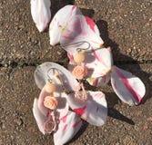 Orecchini e petali rosa Immagini Stock Libere da Diritti