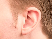 orecchio immagini stock libere da diritti