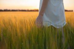 Orecchio commovente del grano della donna nel giacimento di grano Fotografia Stock