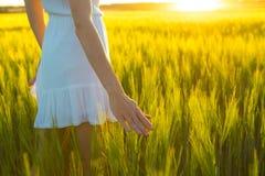 Orecchio commovente del grano della mano della donna nel campo Immagini Stock Libere da Diritti