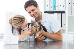Orecchio d'esame veterinario del cucciolo immagini stock