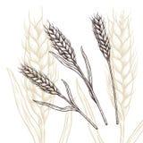 Orecchio del grano royalty illustrazione gratis