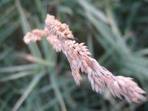 Orecchio della pianta Immagini Stock