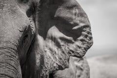 Orecchio di Gap dell'elefante Fotografia Stock Libera da Diritti