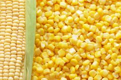 Orecchio di mais fresco e di cereale in scatola Immagine Stock