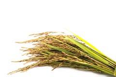 Orecchio di riso Immagine Stock
