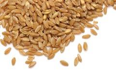 Orecchio e grano del grano Immagini Stock