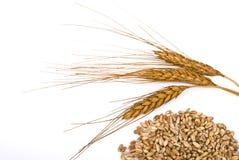 Orecchio e un granulo del frumento Fotografia Stock Libera da Diritti