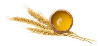 Orecchio fresco del grano del tuorlo d'uovo isolato su fondo bianco fotografia stock libera da diritti