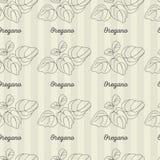 Oregano άνευ ραφής σχέδιο Στοκ Εικόνες