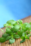 Oregano. Herbs on blue background Royalty Free Stock Image