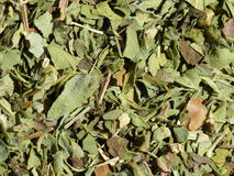 Oregano Stockfoto