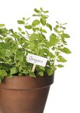 oregano Royaltyfria Bilder