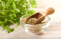 oregano Stockfotografie