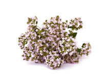 Oregano Royalty Free Stock Photography