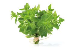 Oregano bunch Royalty Free Stock Images