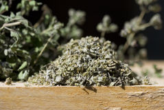 Oregano close-up Stock Image