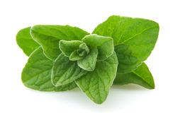 Oregano closeup Stock Image