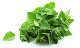 Oregano closeup Stock Photo