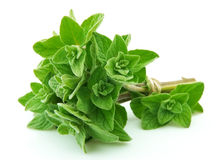 Oregano closeup Stock Images