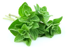 Oregano closeup Royalty Free Stock Photography