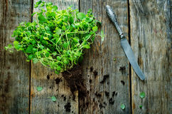 Oregano. On a dark wood background. tinting. selective focus Stock Images