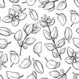 Oregano  drawing. Seamless pattern. Isolated Oregano plant Royalty Free Stock Photos