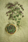 Oregano.Dried. Herbal medicine, phytotherapy medicinal herbs. Stock Photos