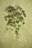 Oregano.Dried herbs. Herbal medicine, phytotherapy medicinal her Royalty Free Stock Photography