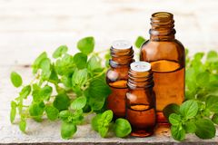 Oregano essential oil in the amber glass bottle and fresh oregano leaves. Oregano essential oil in the amber glass bottle, on the wooden board Royalty Free Stock Image