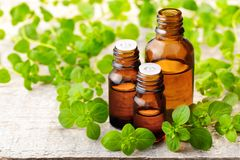 Oregano essential oil in the amber glass bottle and fresh oregano leaves. Oregano essential oil in the amber glass bottle, on the wooden board Stock Photography