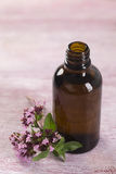 Oregano essential oil Royalty Free Stock Image