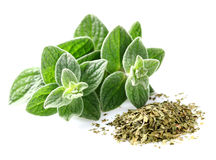 Oregano. Fresh and dry in closeup Stock Images