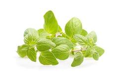 Oregano. Fresh oregano on white background Stock Images