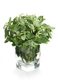 Oregano in glass Royalty Free Stock Image