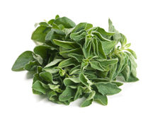 Oregano herb Royalty Free Stock Images
