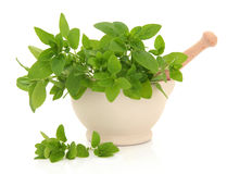 Oregano Herb Royalty Free Stock Photos