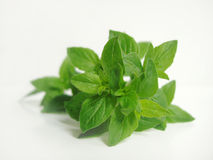 Oregano herb Royalty Free Stock Photography